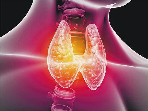 甲狀腺是在頸氣管前方的蝴蝶狀腺體