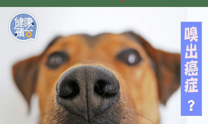 人工智能可以跟狗狗學習,嗅出癌症