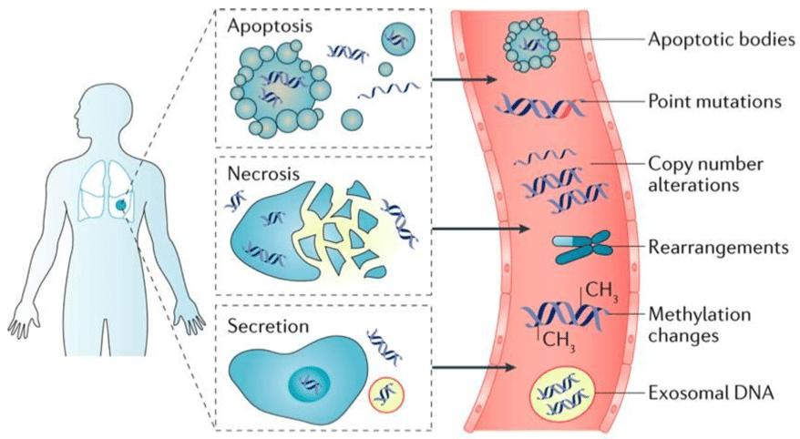 Comprehensive Cancer Genomics Profiling4